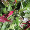 A Ballad to Salad