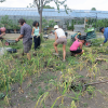 People care in community gardening