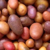 Seeds & Spuds