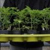 Plant Sale Season