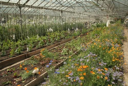 glasshouse flowers